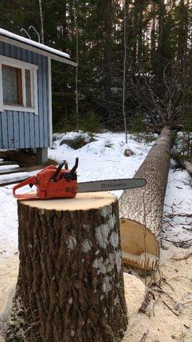 Ongelmapuiden kaataminen Tampere
