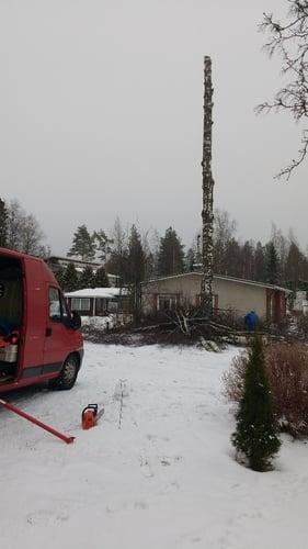 Pihakoivun kaataminen Tampere