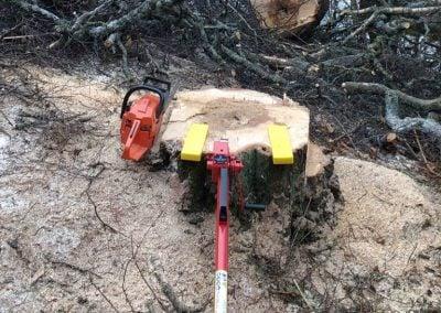 Puun kaataminen Tampere